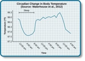 Circadian Change in Body Temperature